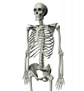 skeleton-6